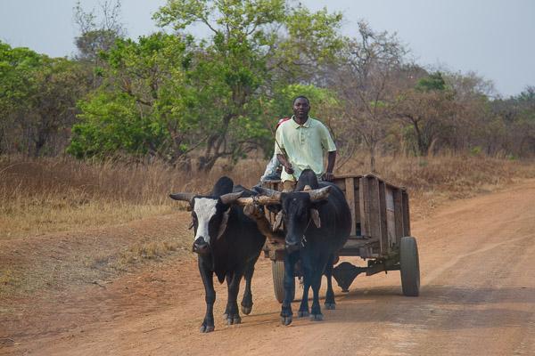 Zambia_2011_1D-7728.jpg