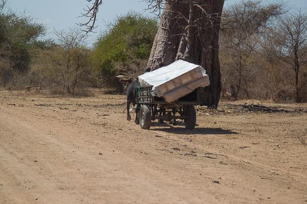 Zimbabwe_2012_1D-9079.jpg