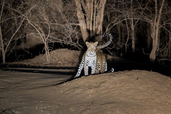 Zimbabwe_2012_1D-9871.jpg
