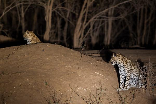 Zimbabwe_2012_1D-9895.jpg