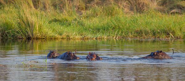 2015_Namibia_1D-6248.jpg
