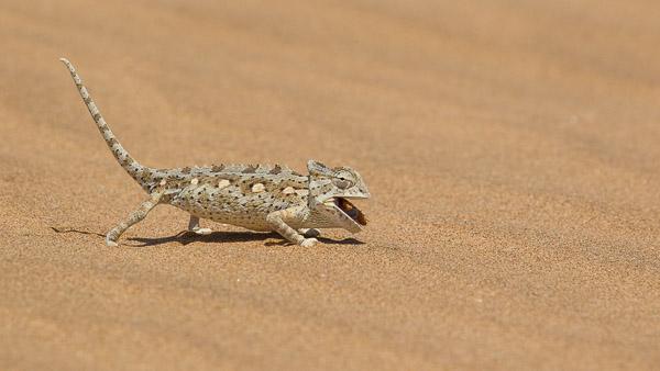 2014_Namibia_1D-8152.jpg