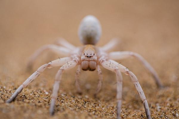 2014_Namibia_5D-5626.jpg