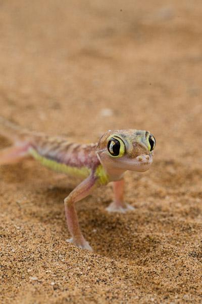 2014_Namibia_5D-5699.jpg
