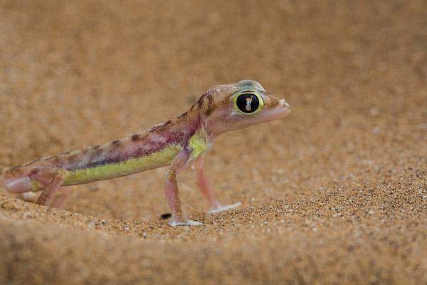 2014_Namibia_5D-5717.jpg