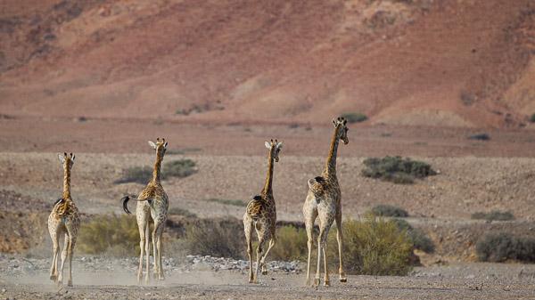 2015_Namibia_1D-2758.jpg