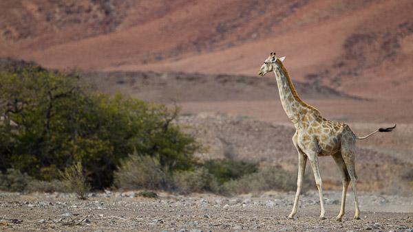 2015_Namibia_1D-2759.jpg