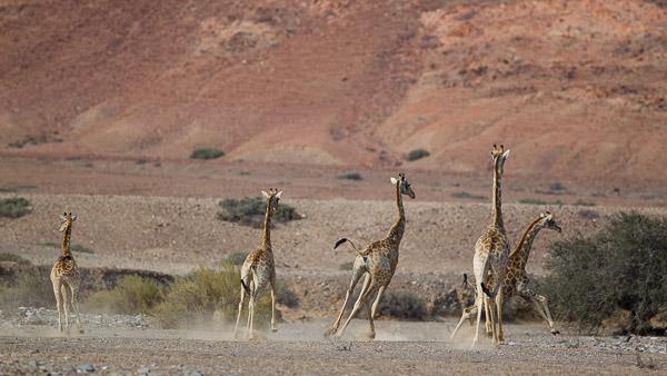 2015_Namibia_1D-2761.jpg